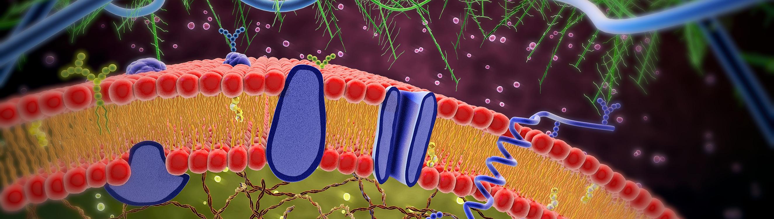 Karsten Tebben: Mitochondriopathien